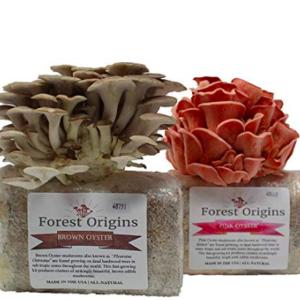 home mushroom farm kit