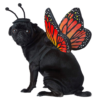monarch butterfly dog costume