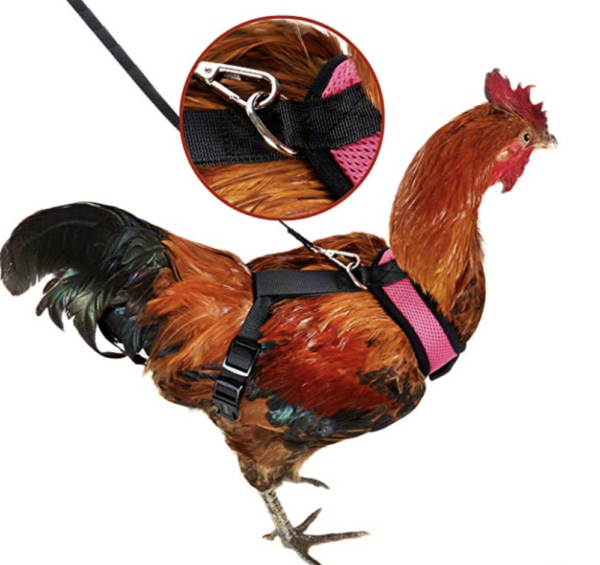 Cock Harness