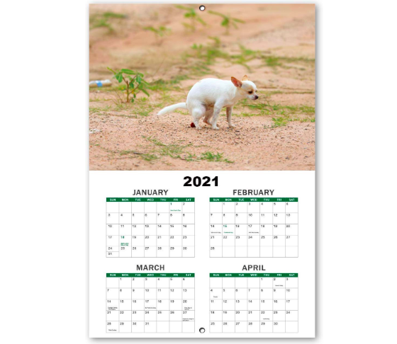 pooping dogs calender 2020