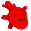 anatomical heart plush