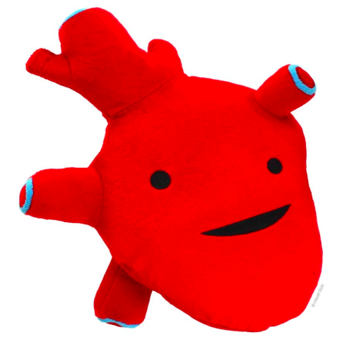 anatomical heart plush