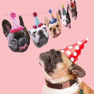 french bulldog birthday hat garland